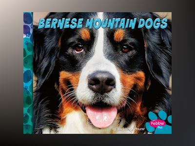 Ljudbok Bernese Mountain Dogs