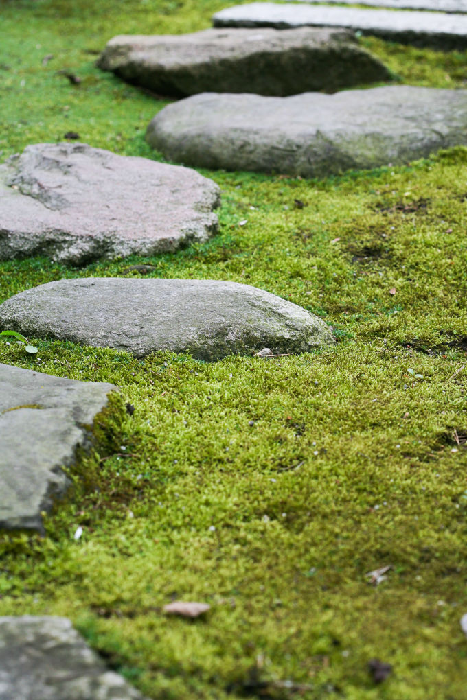 close up of rock path in moss at Anderson Gardens