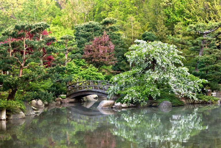 pond with bridge at Anderson Gardens