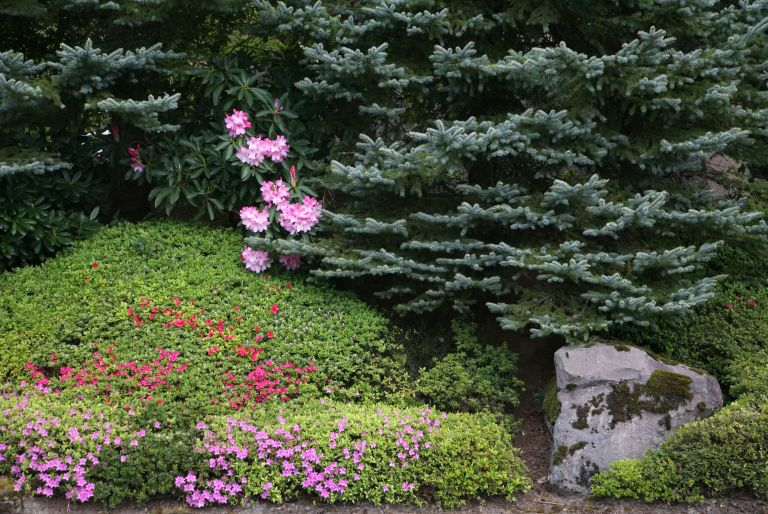 evergreen and flowers
