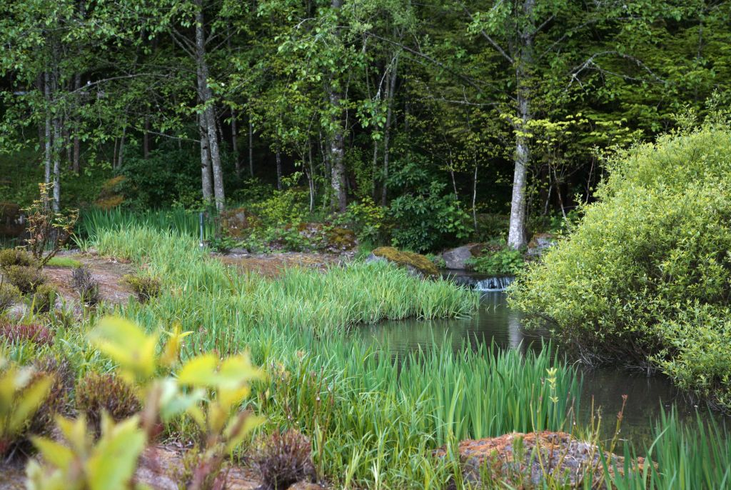 stream with trees and reeds at The Quintet
