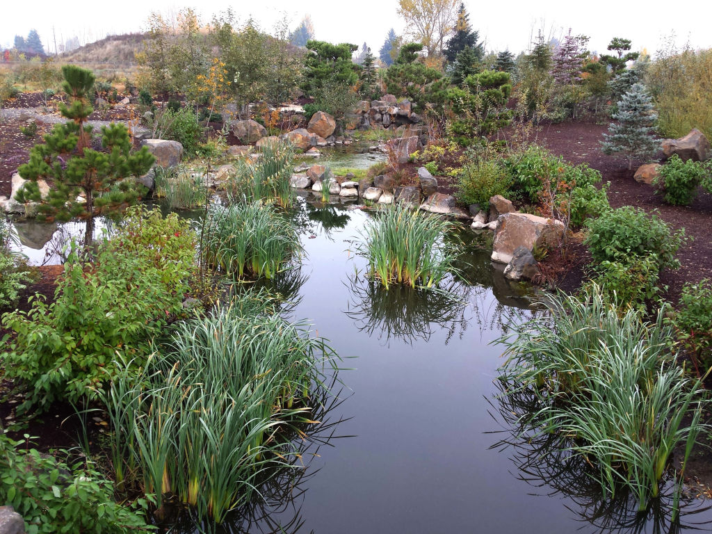 stream with plants at Fernhill Wetlands
