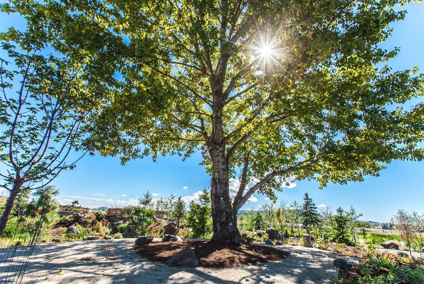 tree with sun shining behind it in Fernhill Wetlands