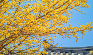 4월, 고즈넉한 꽃 여행