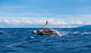 3월, 하와이로 온 바다의 현자