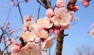 4월, 우리도 있다, 벚꽃 명소