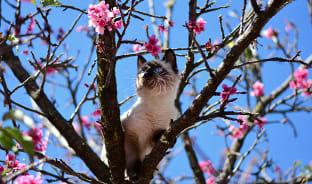 2월, 겨울에 피는 벚꽃