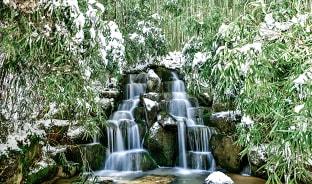 12월, 눈 사이 푸르르다
