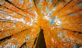 10월, 재즈를 향유하는 가을