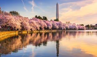 3월, 벚꽃은 보트를 타고