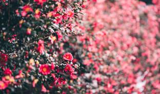 1월, 꽃이 그리운 당신에게