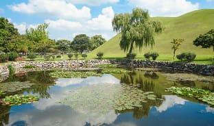 8월, 잔잔한 호수의 연꽃