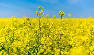 4월, 봄에는 노란 부산