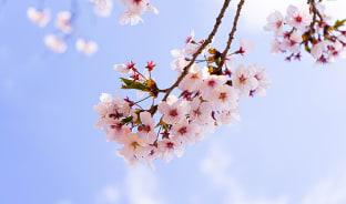 4월, 청주의 맑은 봄