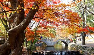9월, 가을의 꽃과 음식
