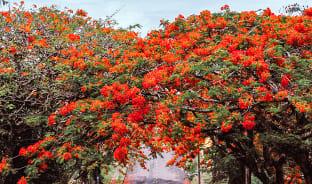 8월, 붉은 빛의 꽃처럼 화려한 축제