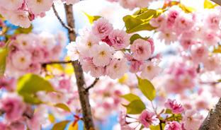 3월, 맑은 봄의 풍경을 보고 싶을 땐