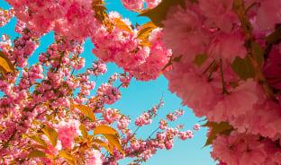 4월, 부다페스트의 봄, 꼭 가 봄!