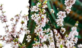 4월, 봄의 정령을 만나러 떠나자