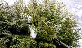 12월, 풀잎자리를 채운 눈송이들