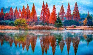 10월, 물든 숲을 걷다