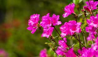 5월, 분홍빛 피어나는 봄