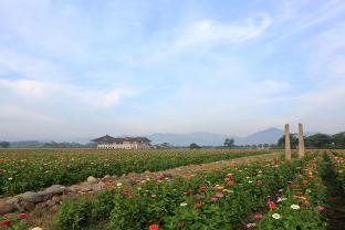 황룡사지 꽃밭
