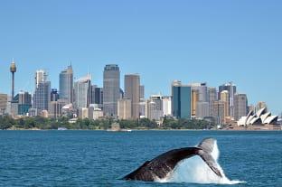 시드니 고래 투어