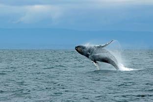 울산 혹등고래