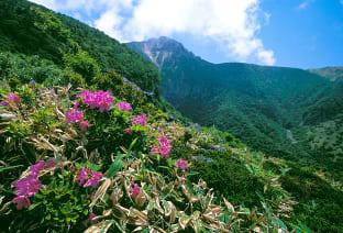 한라산 풍경