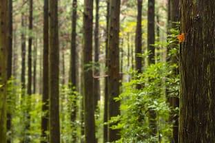 한라산 숲길