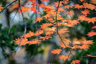 한라산 가을 풍경