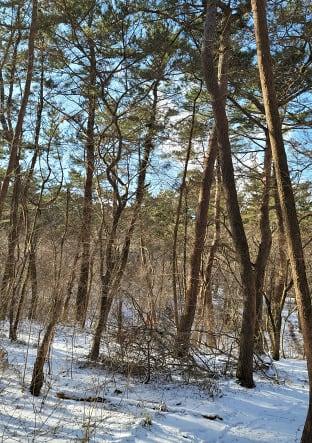 한라산 사려니숲길