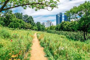 서울숲 피크닉