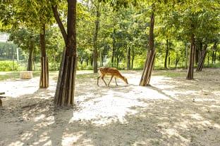 서울숲 사슴