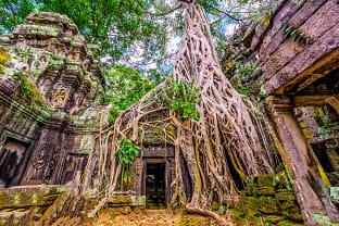 씨엠립 앙코르와트 타 프롬 사원 나무