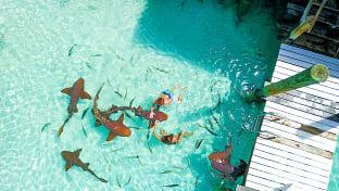 바하마 상어섬