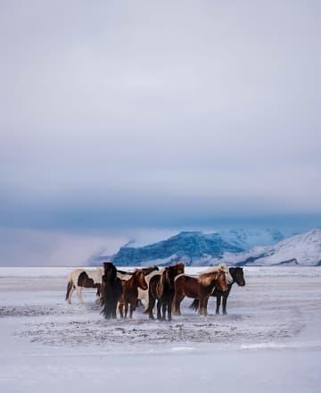 모험가를 위한 여행, 아이슬란드 링로드 남부편