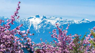 당신의 봄을 책임질 곳, 캐나다 밴쿠버