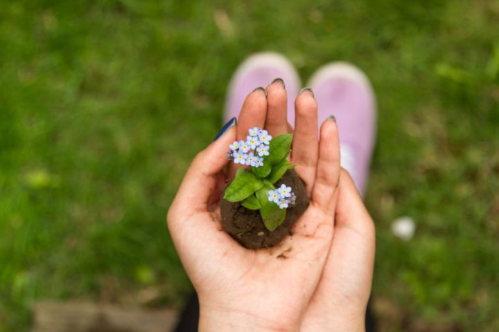 photo of someone holding a small seedling in their hand