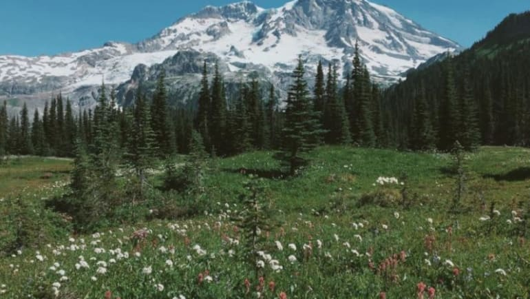summer hiking, wildflowers