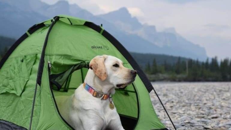 RV pet-friendly campgrounds