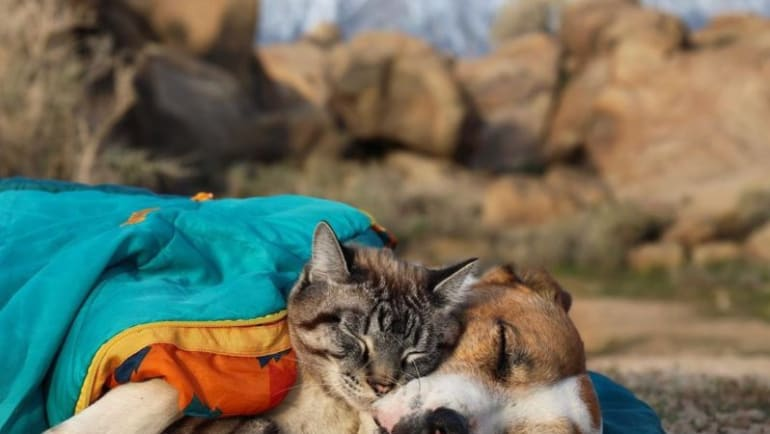 unlikely friends, pet rv travel