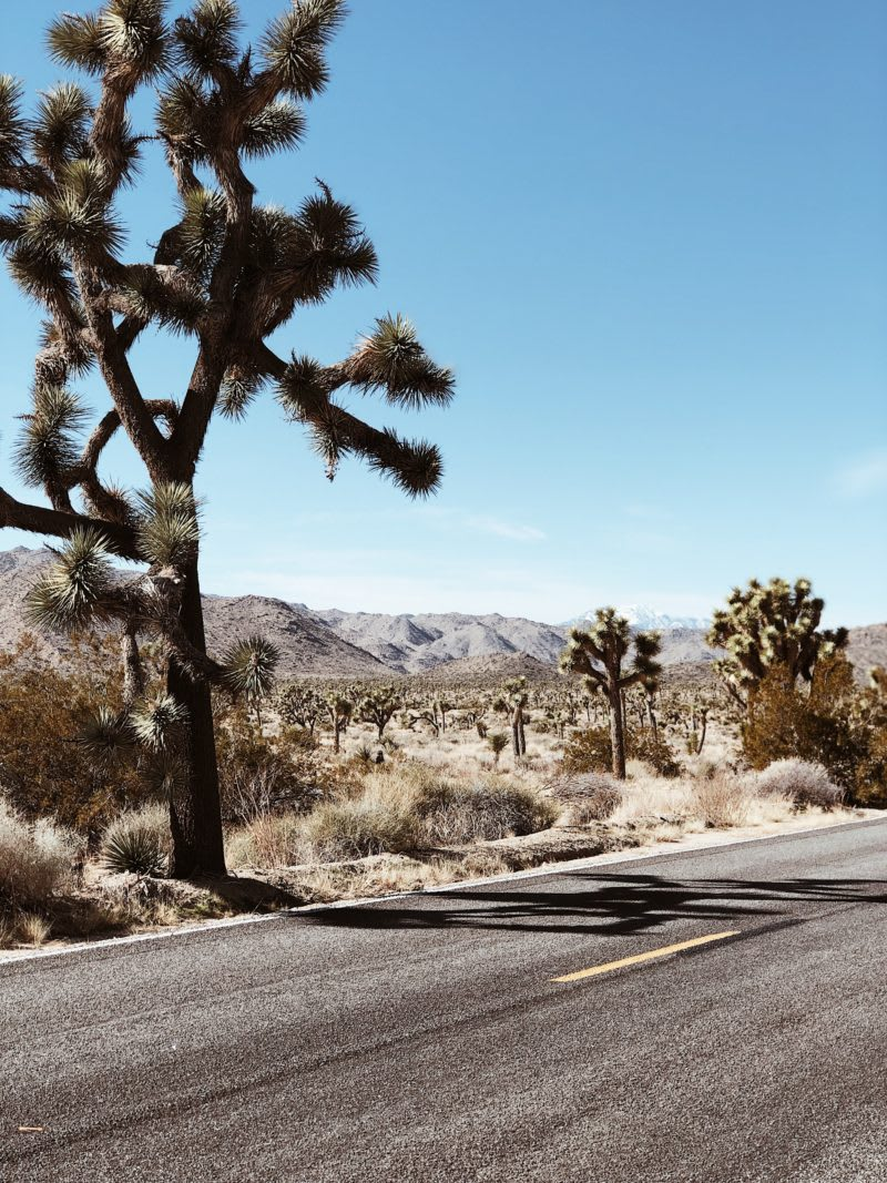 Top ten campgrounds in and around Joshua Tree National Park