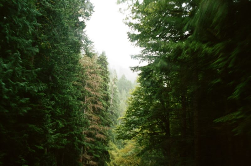 driving through Olympic National Park, old-growth