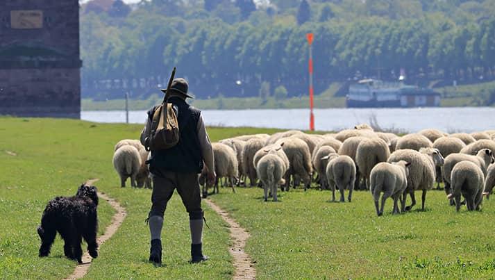 De abt en de herder