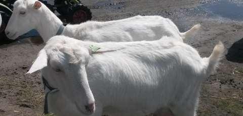 Speel en IJsboerderij De Drentse koe