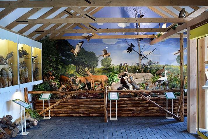Natuurmuseum Rheezer-Marke
