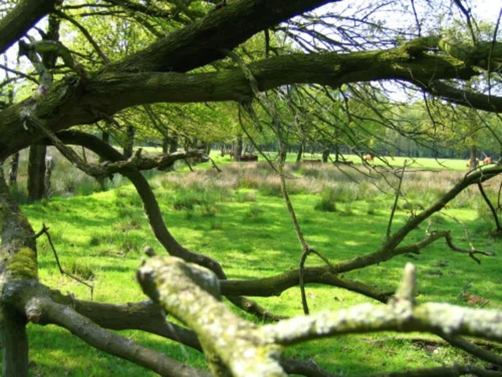 Natuurpoort De Heksenboom