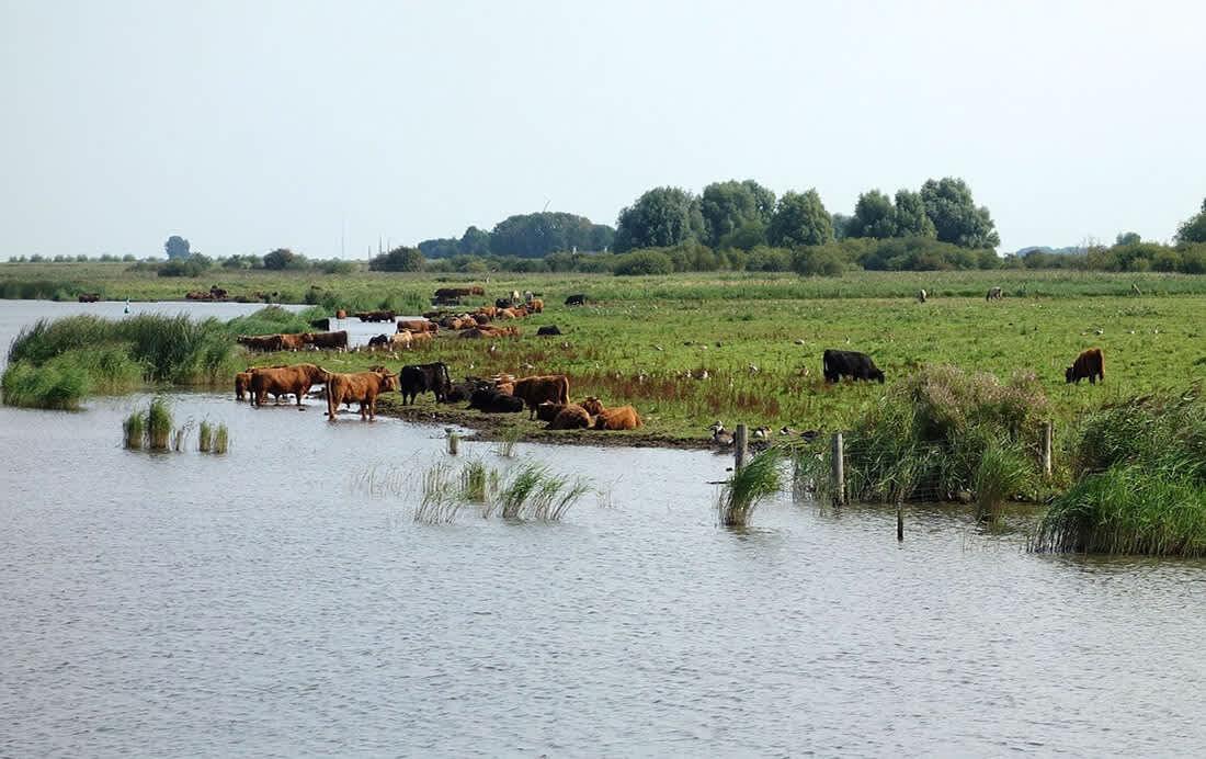 Nationaal Park Lauwersmeer bekijken op de fiets